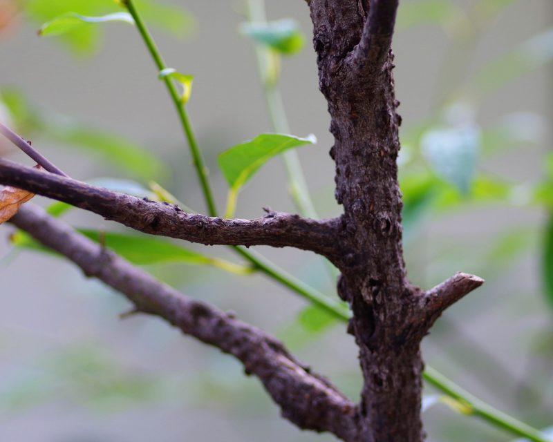アユーラ メディテーションバ クロモジの木